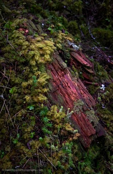 Moss and rotting log