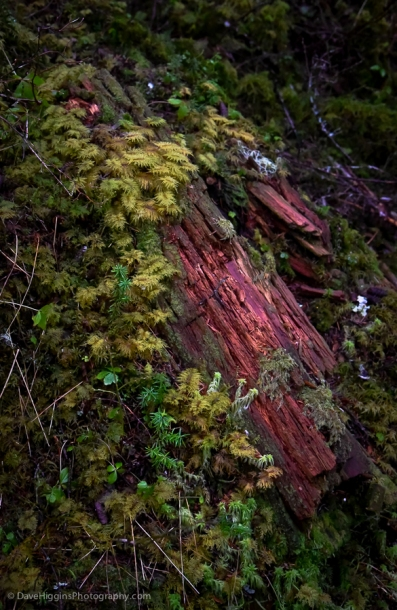 Moss and rotting log
