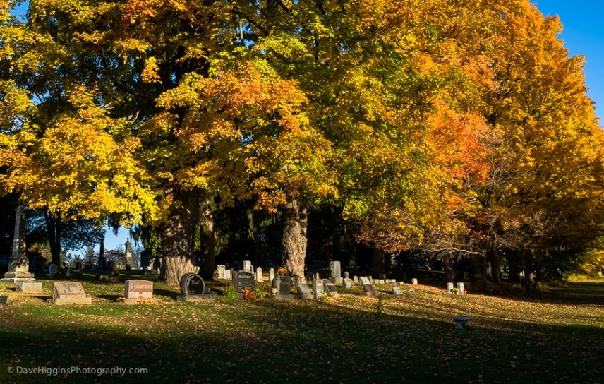 Autumn Morning - NY