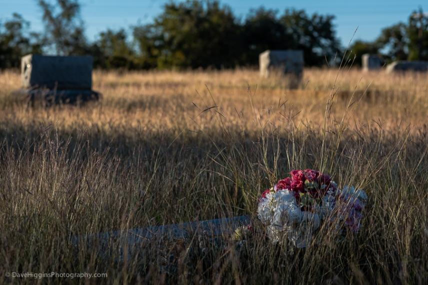 Flowers In Long Grass - TX