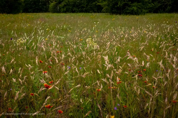 While not as dramatic as sights like the Grand Canyon, grassland prairies offer their own beauty.