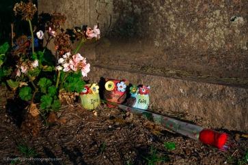 3 Owls & Rose - New York