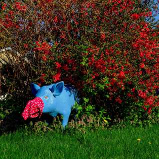 Blue Pig With Mask